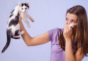 анализ аллергия на шерсть