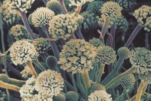 анализ на грибковые аллергены сдать